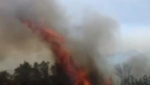 Tarsus'ta zeytinlik alanda yangın