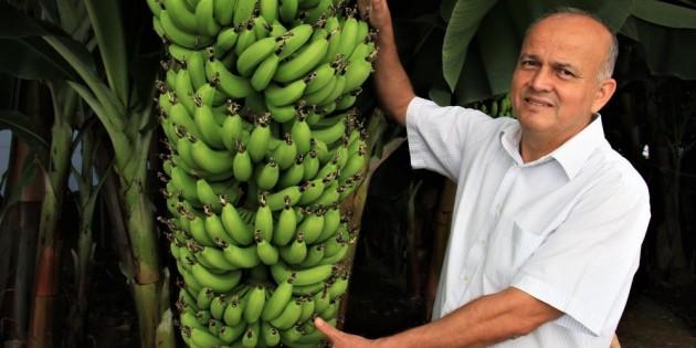 6 yeni muz çeşidi geliştirildi, çiftçi yüzde 30 fazla kazanacak