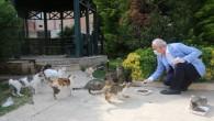 Akdeniz'de sokak hayvanları unutulmadı