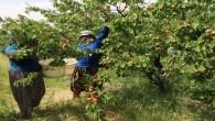 Tarım işçilerine korona tedbiri