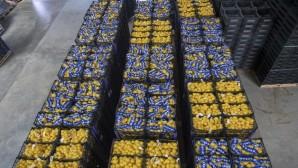 Mersin'den İstanbul'a 20 ton limon daha gönderildi
