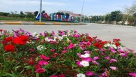 Mersin, yaz çiçekleriyle renklendi