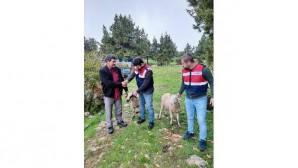 Hayvan hırsızları jandarma ekiplerince yakalandı