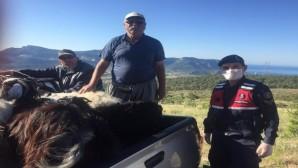 Silifke'de kaybolan hayvanları jandarma buldu