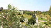 Toroslar'da parklar çiçek açtı