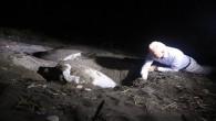Caretta carettalar Mersin sahillerine yumurta bırakmaya başladı