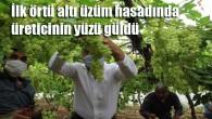 Mezitli'de ilk örtü altı üzüm hasadı yapıldı