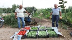 Gönüllü serasında üretilen ürünlerle, ihtiyaç sahiplerine yemek yapılıyor