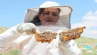 Zeynep Yıldız, Toros Dağları'nda 17 yıldır Kraliçe Arı üretiyor