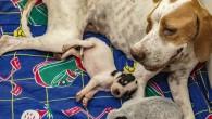 Son 7 Ayda 1580 kedi ve köpek yaralanma ihbarı yapıldı