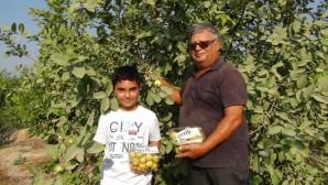 """Silifke'de Meyvelerin kralı ve kraliçesi """"guava""""nın hasadına başlandı"""