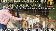 """""""MERSİN BÜYÜKŞEHİR BARINAĞI'NDA NELER OLUYOR?"""""""