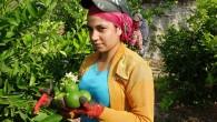 Limon diyarında hasat besmele ile başladı
