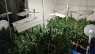 Uyuşturucu yetiştirmek için evi laboratuvara çevirmiş