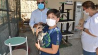 Mersin'deki hayvan barınağında 31 hayvan sahiplendirildi