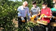 Başkan Gültak ve çocuklar narenciye toplayıp  İzmir'e gönderdi