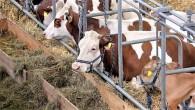 Hayvansal ürün sektör temsilcileri, yüksek yem fiyatlarından dertli