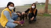 Sessizliğe bürünen sahillerde sokak köpekleri beslendi