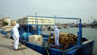 Akdeniz Belediyesi, balıkçı teknelerini dezenfekte etti