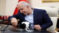 Başkan Gültak, engelli kediyi misafir etti