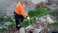 Tarsus'ta zararlılara karşı kış aylarında da mücadele