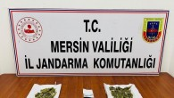 Jandarmadan uyuşturucu operasyonu: 3 gözaltı