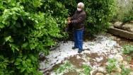 Dolu yağışı ekili alanlara zarar verdi