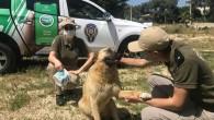Polis sokak hayvanlarını unutmadı