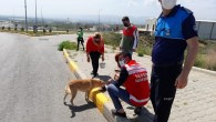 Akdeniz Belediyesi sokak hayvanlarını unutmadı