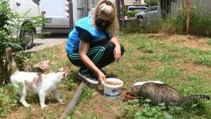 Yenişehir Belediyesi, sokak hayvanlarını yalnız bırakmıyor
