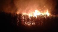Koruma altındaki Göksu Deltası'nda yangın