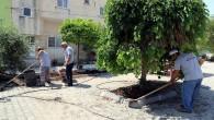 Akdeniz'de yeni dönemde park ve yeşil alanlar yenileniyor