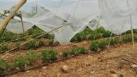 Mersin'de dolu yağışı sebze ve meyveyi vurdu