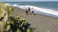 Koruma Altına alınan Alata Sahili'nde deniz kaplumbağaları güvende