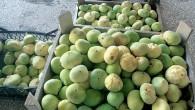 Mersin'de incirin kilosu 20 liradan alıcı buldu