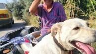 Köpeğe eziyet eden şahsı kayda alıp polise teslim ettiler
