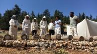 Toroslar'da asırlık bal yeniden üretilecek
