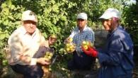 Meyvelerin kral ve kraliçesi Silifke'de de yetişiyor