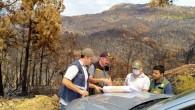 Mersin'de yangın alanlarında gençleştirme tespitleri tamamlandı