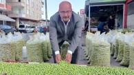 Yeşil zeytinde bu yıl rekolte düşük